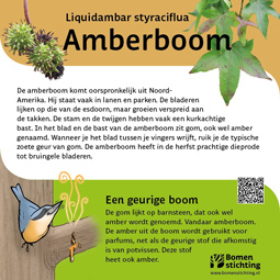 bordje amberboom