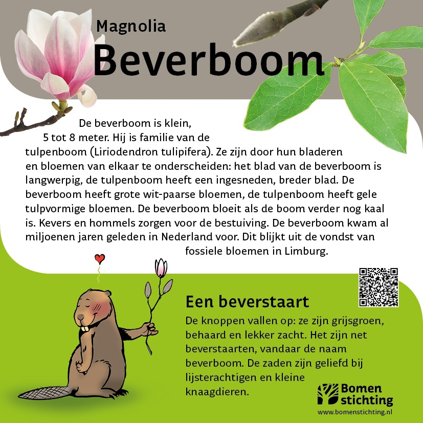 bordje beverboom