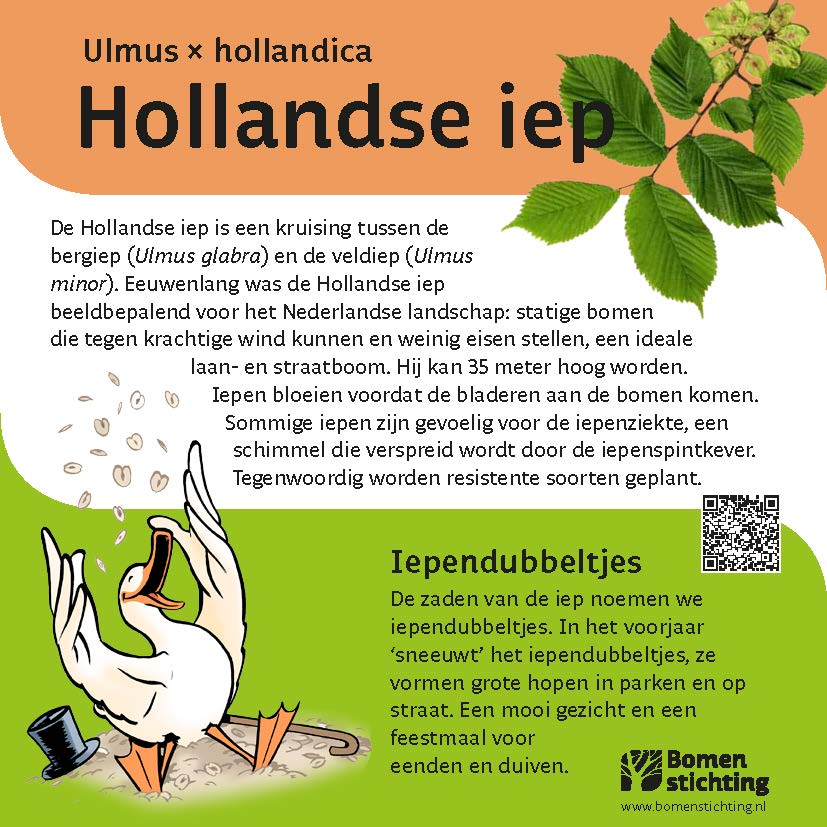 bordje hollandseiep