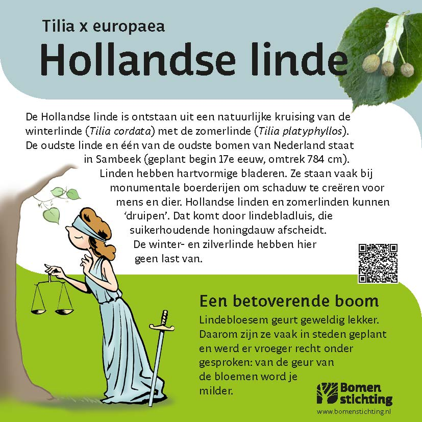 bordje hollandselinde