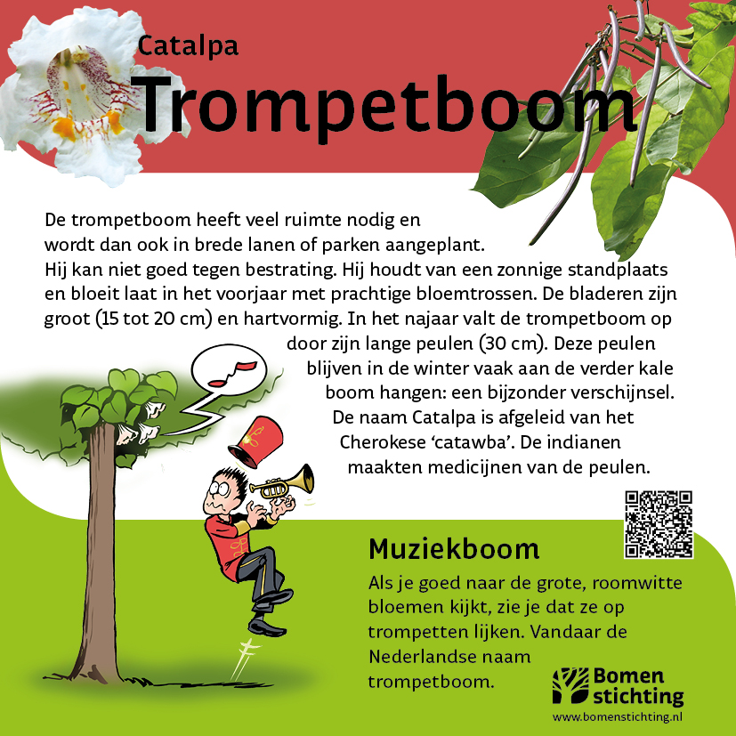 bordje trompetboom