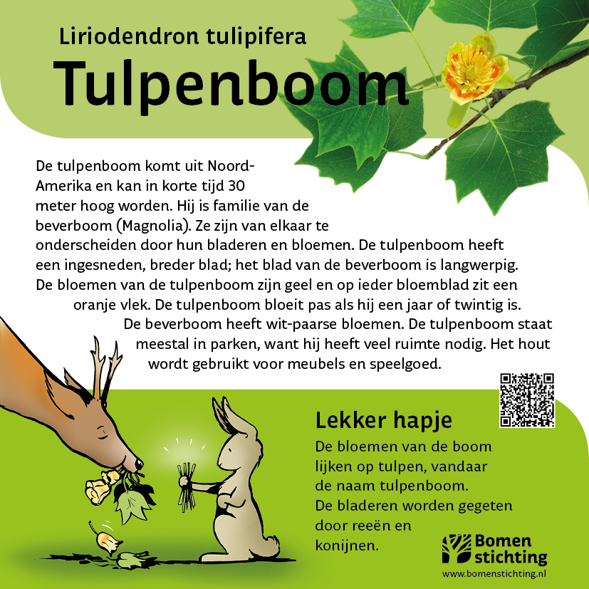 bordje tulpenboom